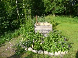 Spridningsbenägna växter runt kompost_resize